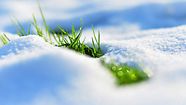 Grass and snow
